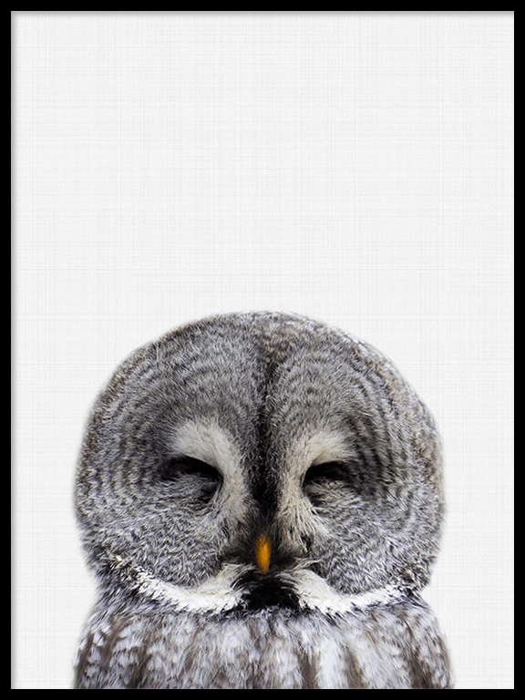 Owl Wall Art Print - PRRRINT