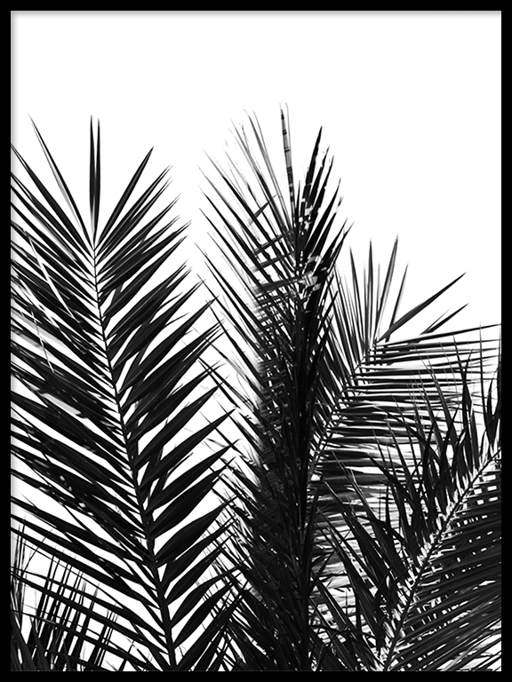 Palm Leaves No2 Wall Art in Black and White - PRRRINT