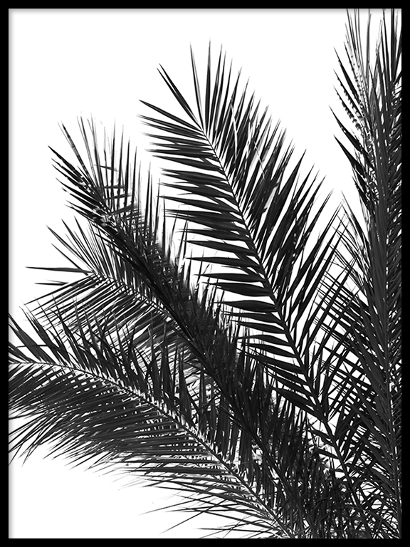 Palm Leaves Print in Black and White - PRRRINT