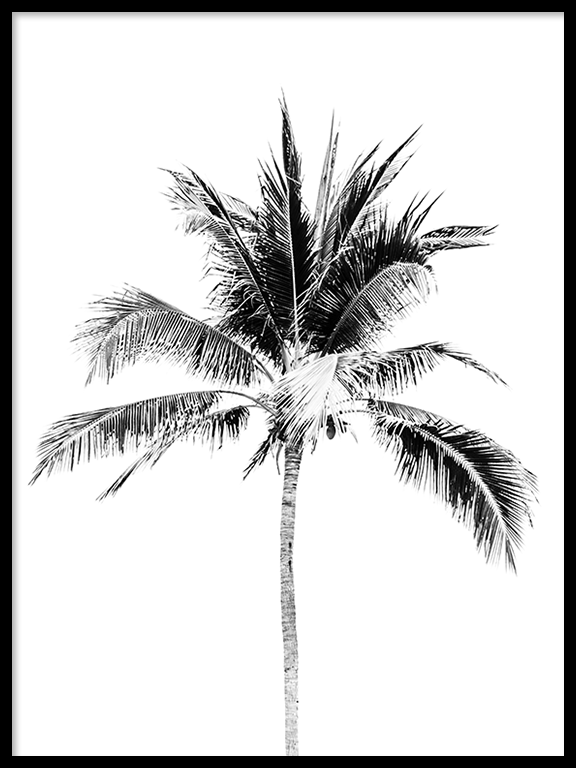 Palm Tree No3 Wall Art Print in Black & White - PRRRINT