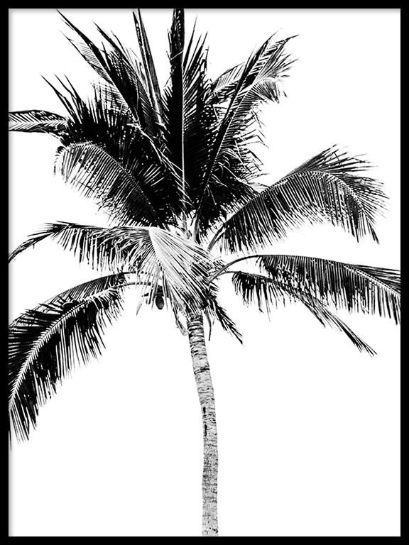 Palm Tree No4 Wall Art Print in Black & White - PRRRINT