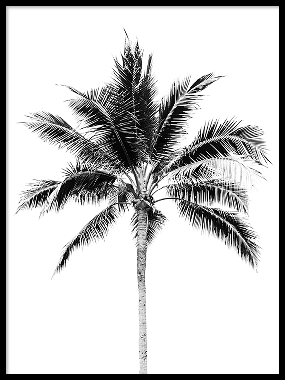 Palm Tree Wall Art Print in Black & White - PRRRINT
