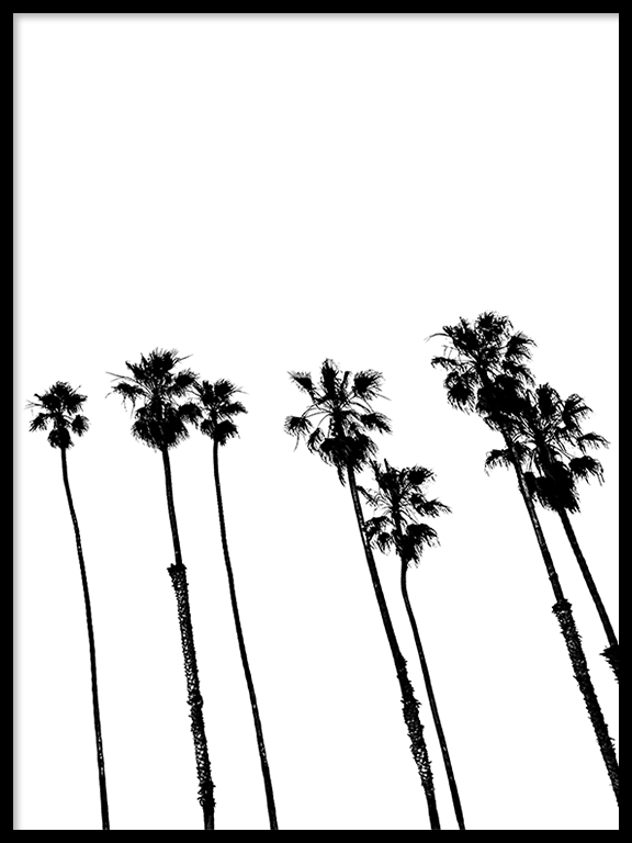 Palm Trees No2 Wall Art Print in Black & White - PRRRINT
