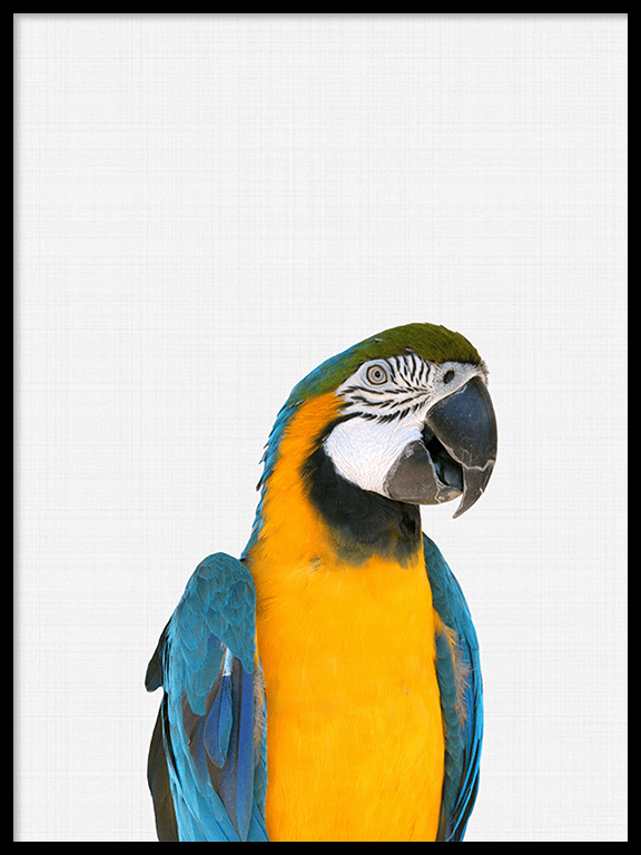 Parrot Wall Art Print - PRRRINT