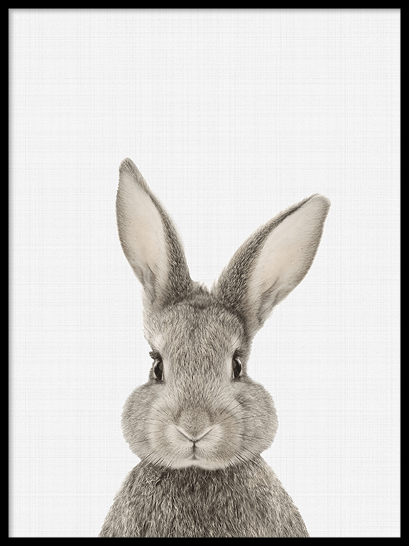 Rabbit (Bunny) Wall Art Print - PRRRINT