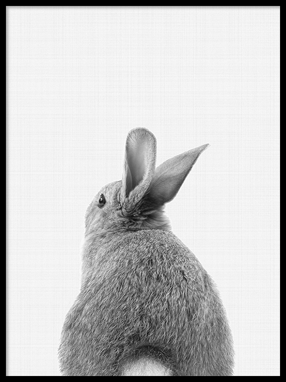 Rabbit Tail (Bunny) Wall Art Print in Black & White - PRRRINT