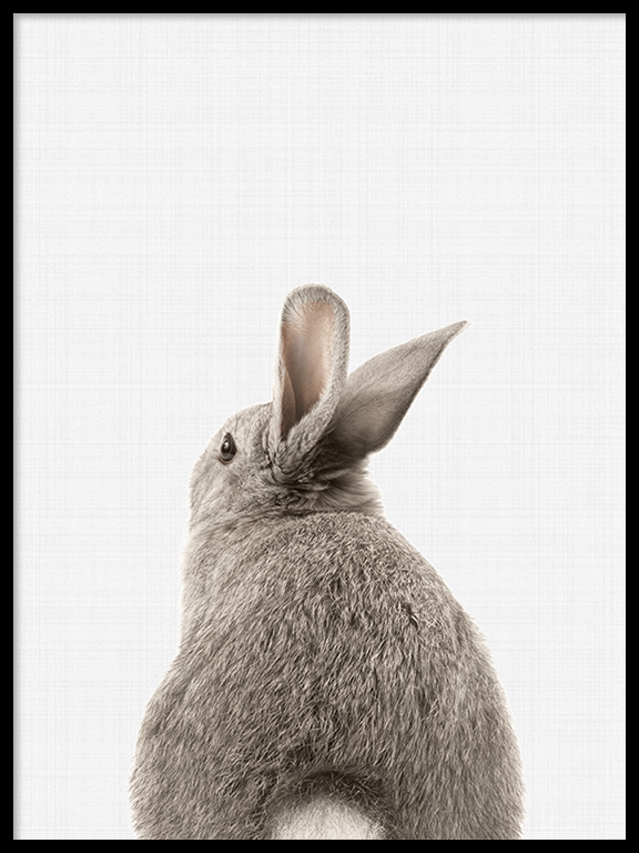 Rabbit Tail (Bunny) Wall Art Print - PRRRINT