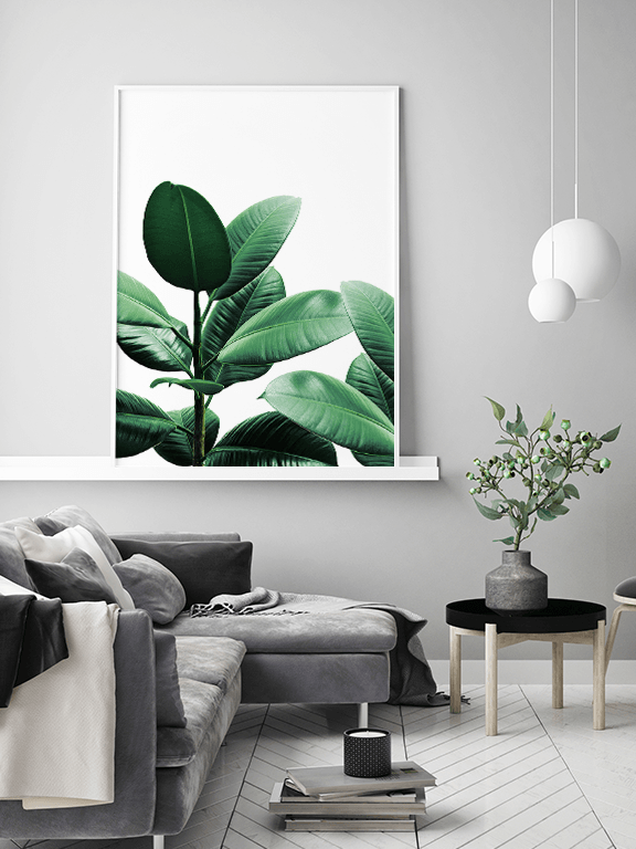 Rubber Plant No4 Wall Art Print - PRRRINT