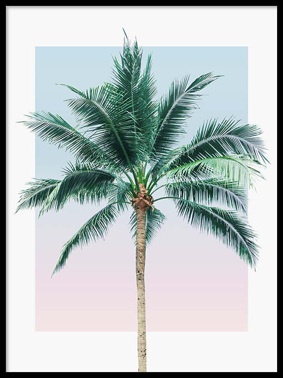 Sunset Palm Tree Wall Art Print - PRRRINT