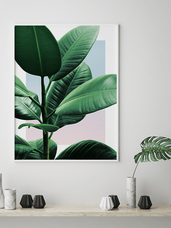 Sunset Rubber Plant No2 Wall Art Print - PRRRINT