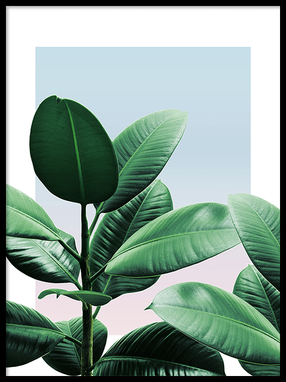 Sunset Rubber Plant No3 Wall Art Print - PRRRINT