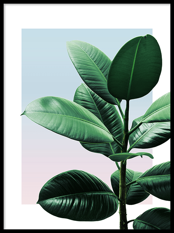 Sunset Rubber Plant Wall Art Print - PRRRINT