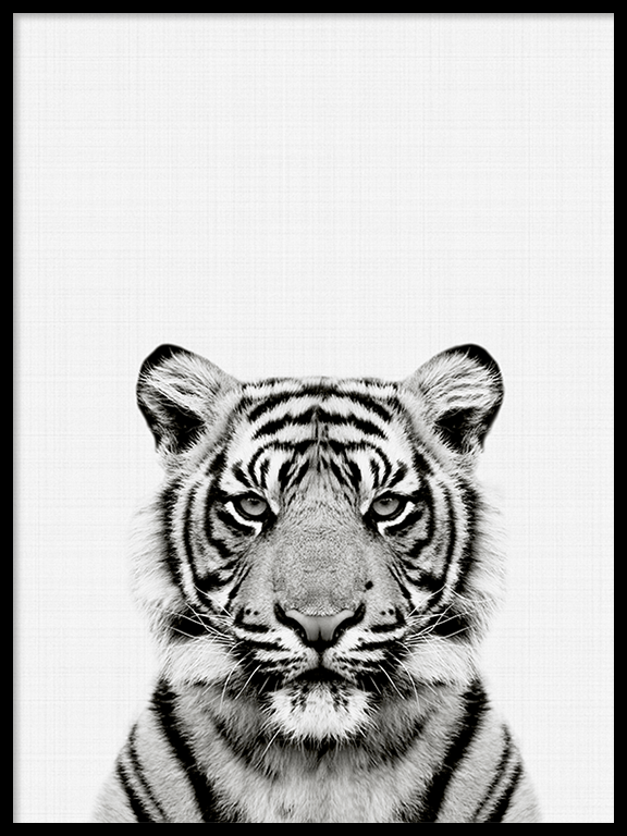 Tiger Wall Art Print in Black and White - PRRRINT