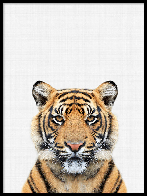 Tiger Wall Art Print - PRRRINT