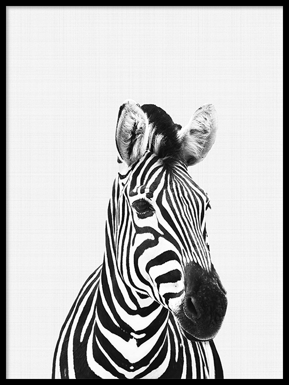 Zebra Wall Art Print in Black and White - PRRRINT