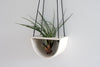 Half Moon Air Plant Hanger