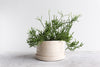 Round Pinched Planter with Plate - Summer Sweet