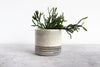 Round Pinched Planter with Stripes - Seafoam