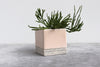 Herringbone Square Planter - Summer Sweet