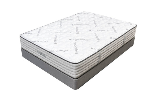 Acacia Firm Organic Talalay Latex Hybrid Mattress
