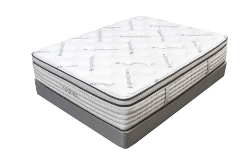 Birch Plush Euro Top Organic Talalay Latex Hybrid Mattress