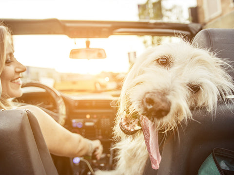Why LA Is One of the Most Dog-Friendly Cities in America