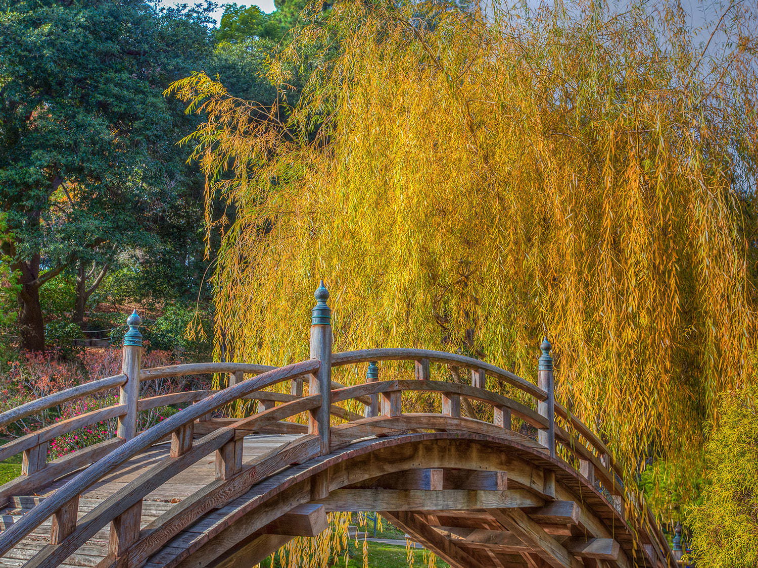 where to find the best botanical gardens in los angeles - Huntington library