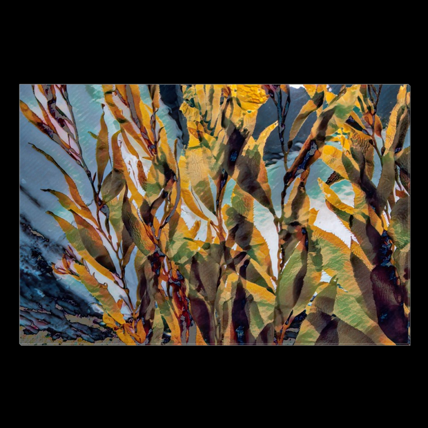 "Canvas Wrap ""Kelp Forest"