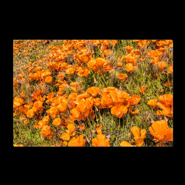 "Canvas Print ""Poppy Field"" (3390730731620)"
