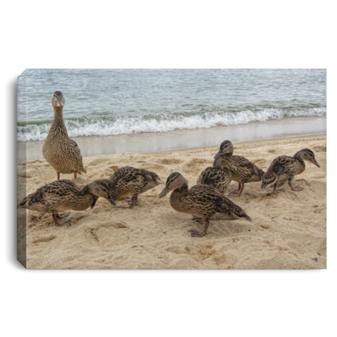 Canvas Print Goose and Goslings White / 12 x 8 Canvas Print (2165095432292)