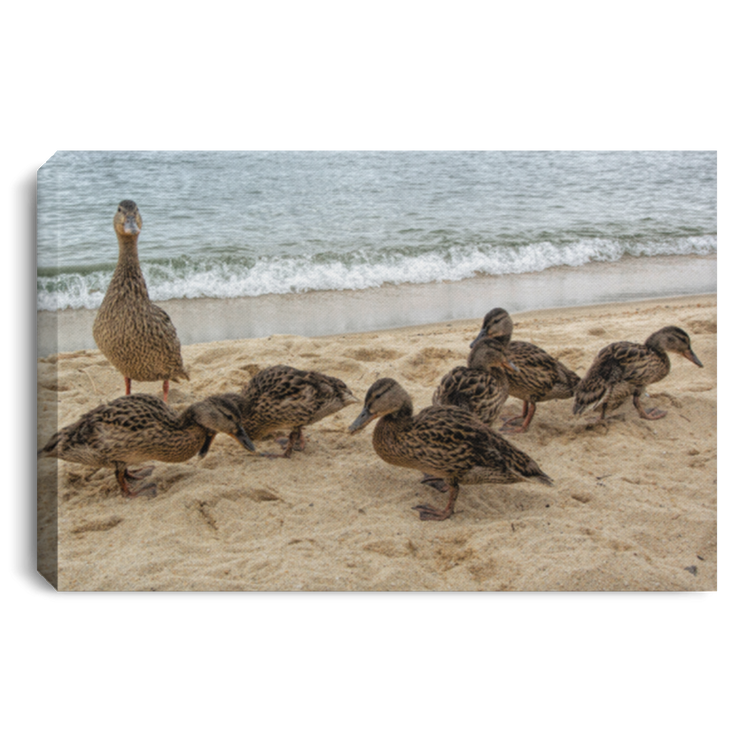 Canvas Print Goose and Goslings White / 12 x 8 Canvas Print
