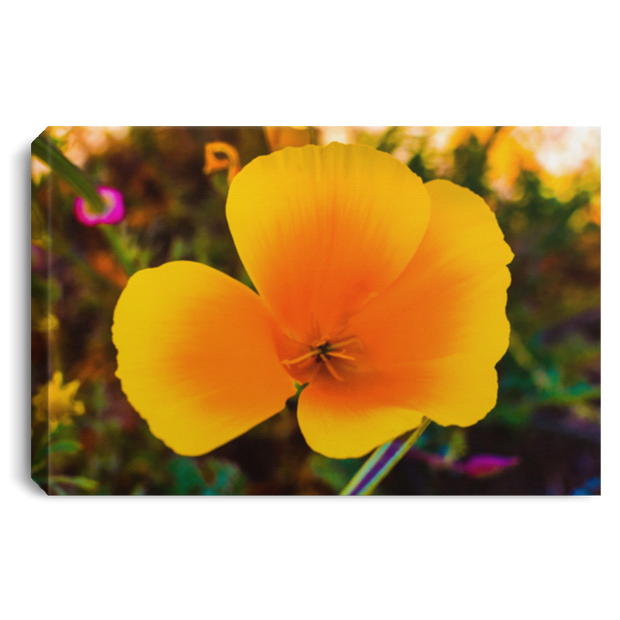 "Canvas Print ""Golden Poppy"""