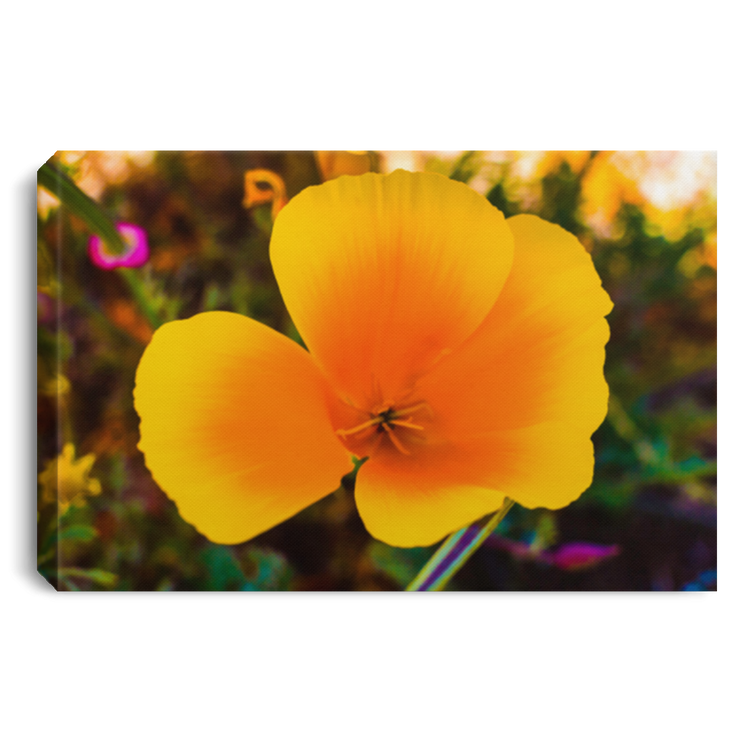 Canvas Print Golden Poppy White / 12 x 8 Canvas Print