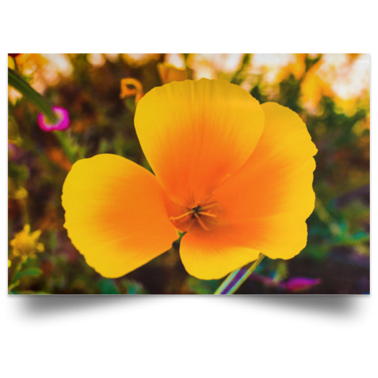 Satin Poster Golden Poppy White / 18 x 12 Poster (2537660842084)