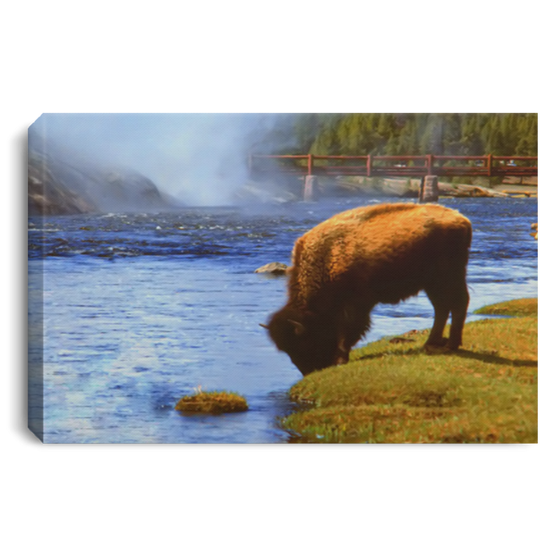 Canvas Print The Bison White / 12 x 8 Canvas Print (1900853887076)