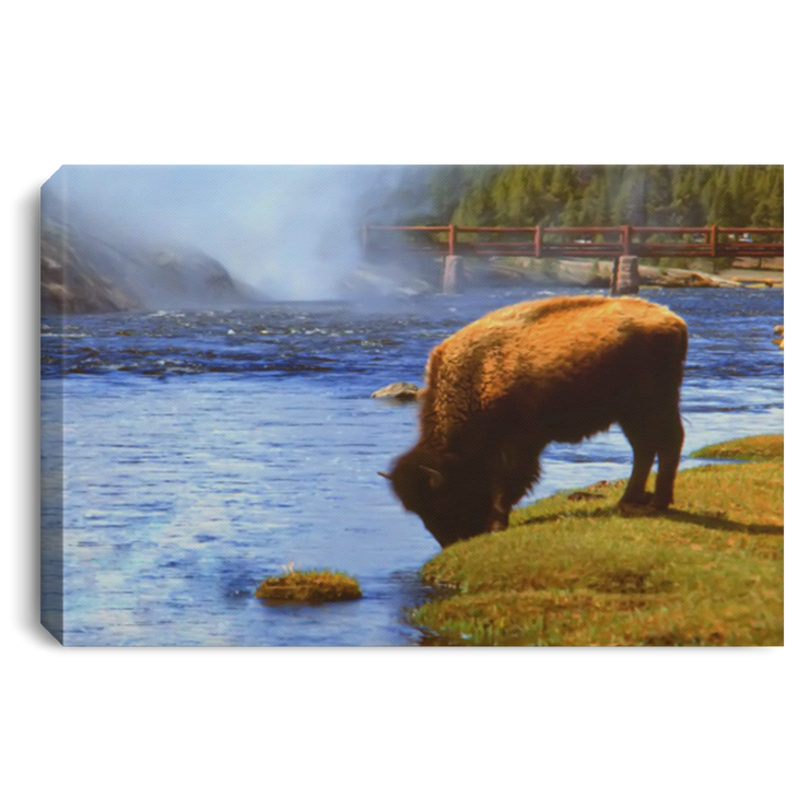Canvas Print The Bison White / 12 x 8 Canvas Print