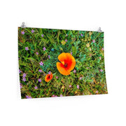 "Premium Matte Poster ""Two Poppies"""