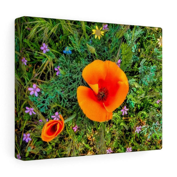 "Canvas Gallery Wraps ""Two Poppies"""