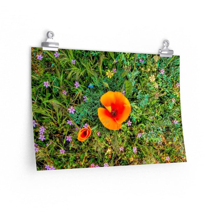 Premium Matte Poster Two Poppies Poster (3256736809060)
