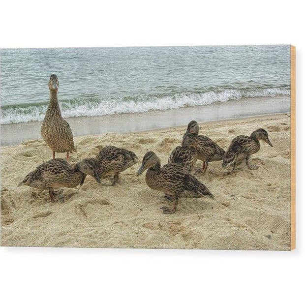Wood Print Goose And Goslings 12.000 x 7.250 Wood Print
