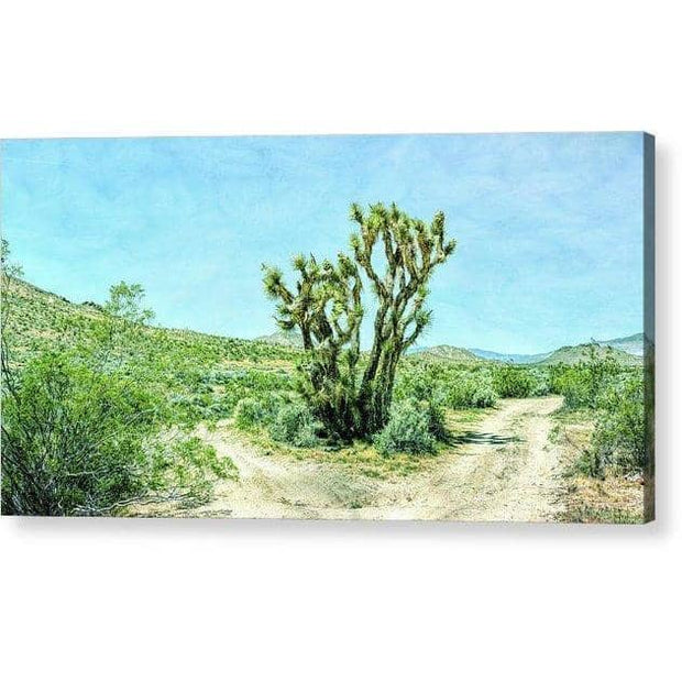 "Acrylic Print  ""The Joshua Tree """