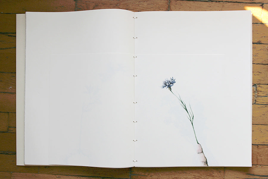 Cristina Pancini, (NOTHING BUT) FLOWERS