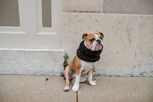 Pet infinity cowl | Dog infinity scarf | cowl scarf