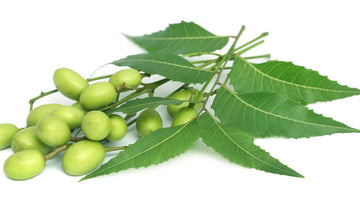 Neem - The Magic Ingredient to Heal Skin