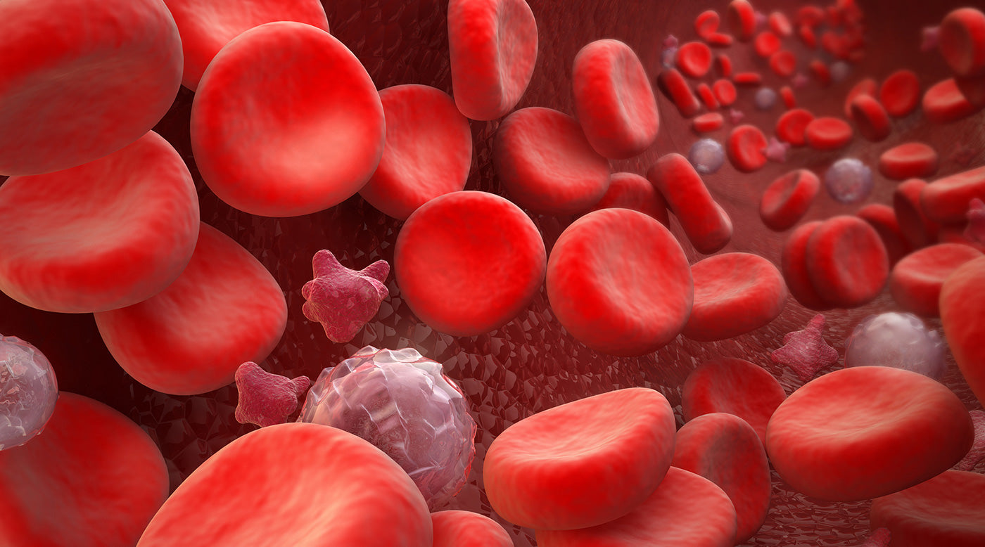 erythropoietin and red blood cells