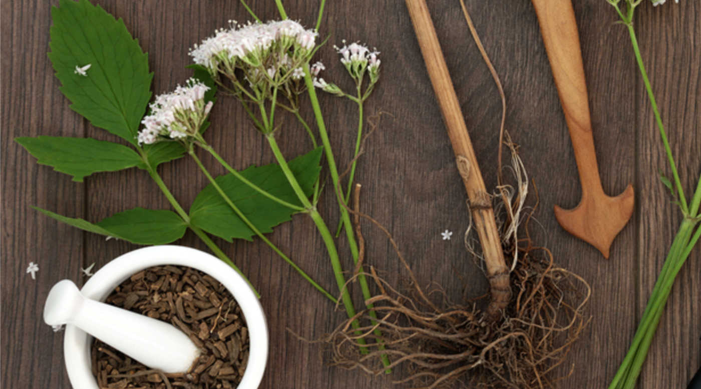 valerian flower and root