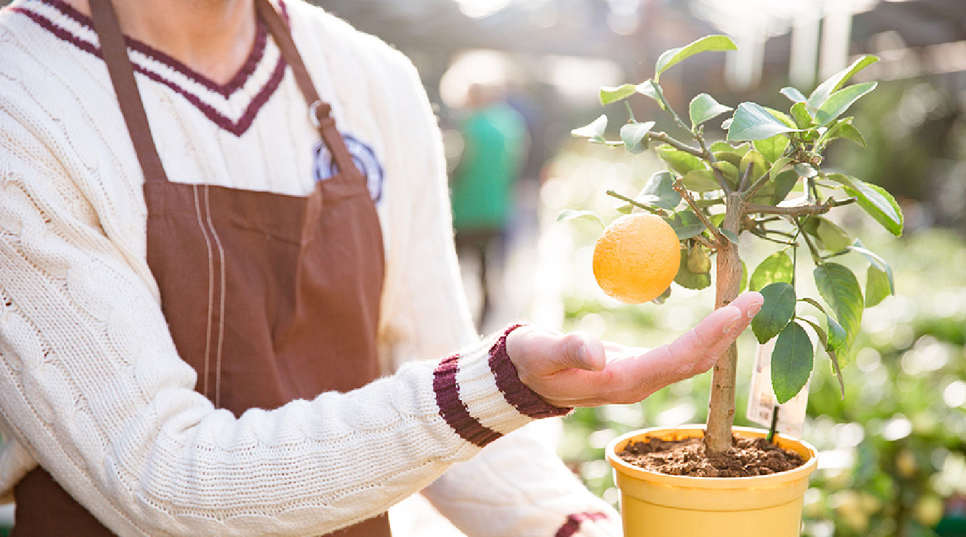 woman tending orange plant
