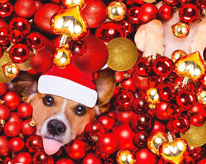 Digital Cotton Print - Christmas Dogs