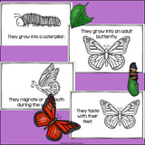 Butterflies Mini Book for Early Readers
