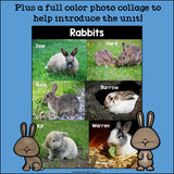 Rabbits Mini Book for Early Readers - Bunny Mini Book